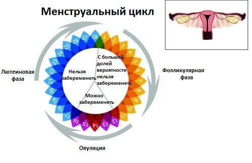Менструальный цикл у женщины на схеме