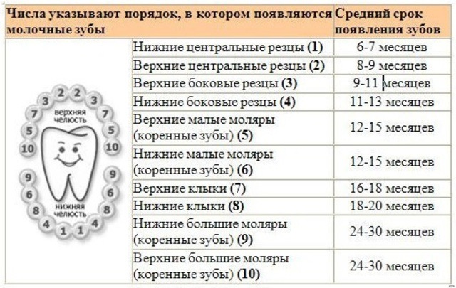 Таблица с приблизительными сроками появления молочных зубов у ребёнка