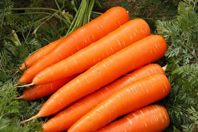 Свежая морковь на зеленой траве
