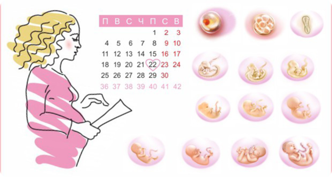 Беременная девушка с календарем