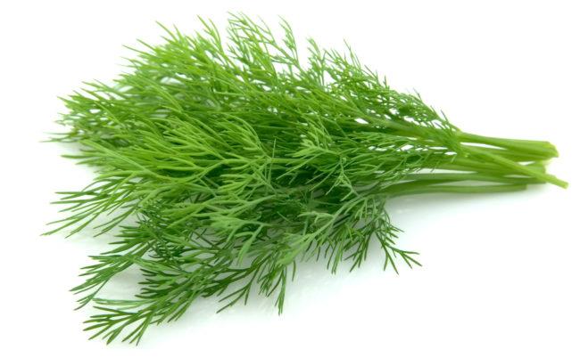Зеленый укроп на белом фоне