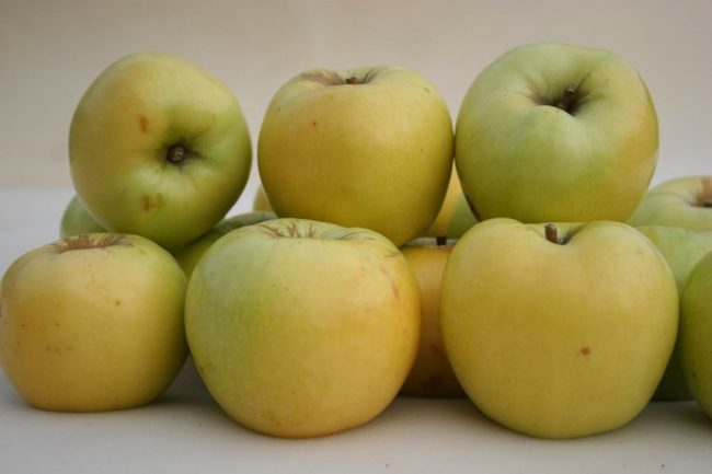 Зелёные яблоки сорта антоновка