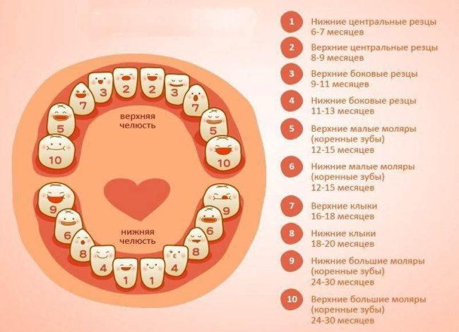 Таблица прорезывания зубов у девочек